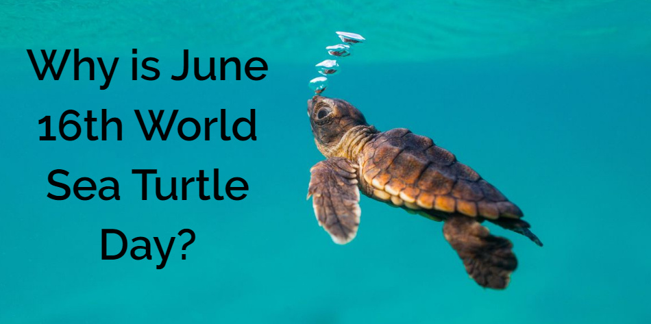 Why is June 16th World Sea Turtle Day?