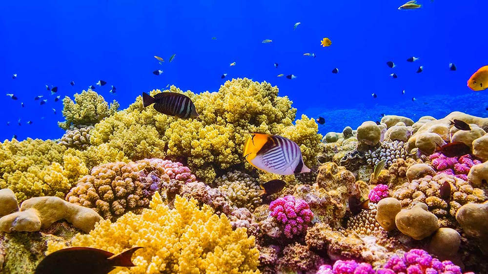 Coral reefs of Red Sea face existential threat due to illegal fishing