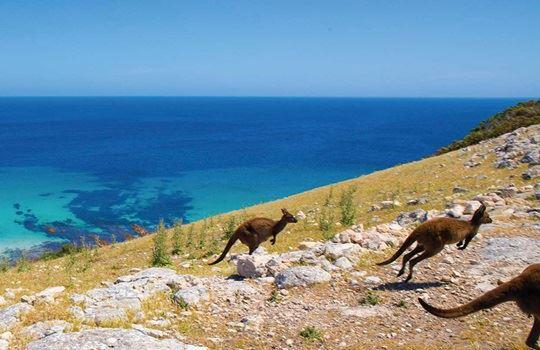 Kangaroo Island recovers from its devastating bushfires