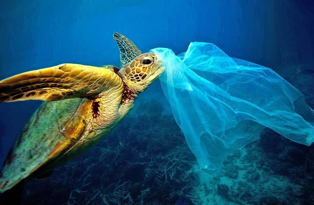 Plastic ingestion by fish becomes a bigger problem
