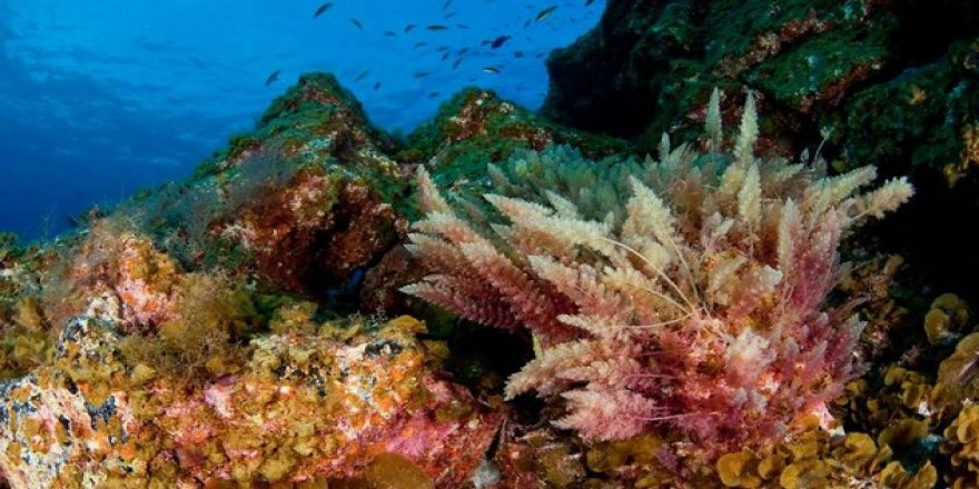Marine life of the Mediterranean Sea is in danger