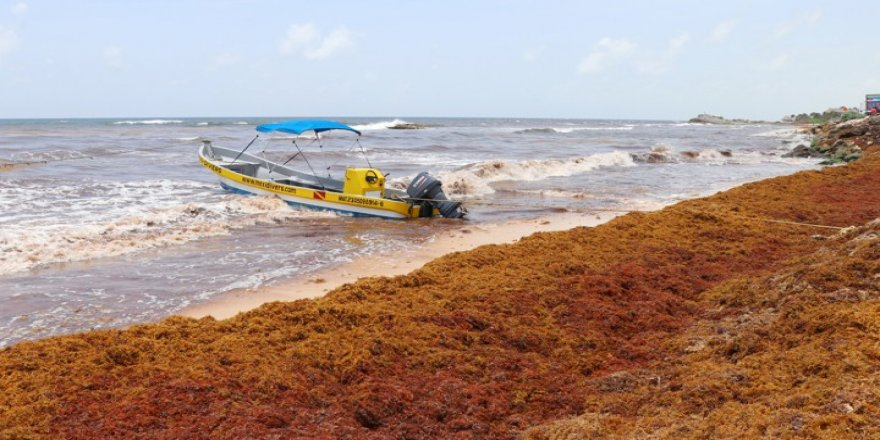 Damen partners with Maris to work on the seaweed solution
