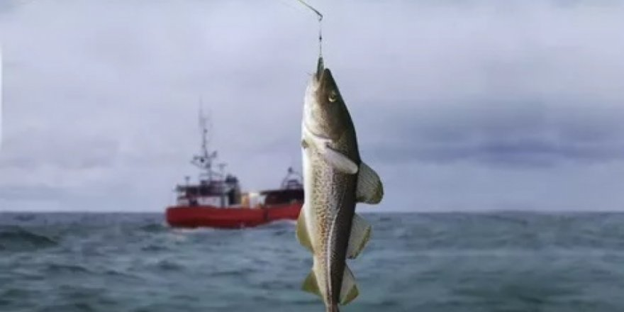 New requirements for fishing in Baltic Sea