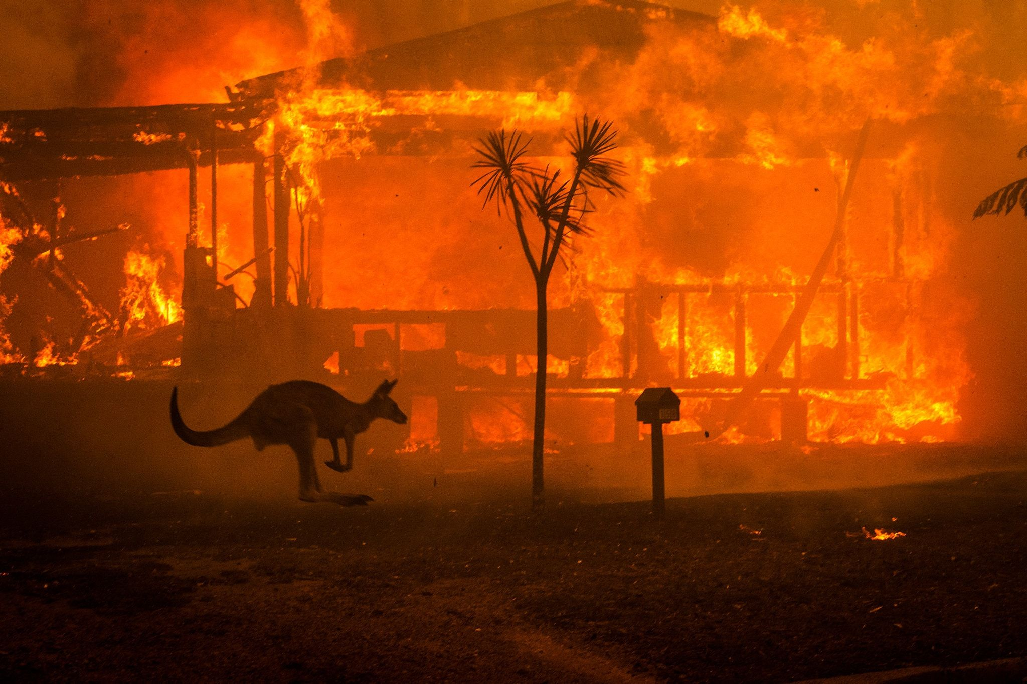 Carnival Australia supports Red Cross bushfire fund