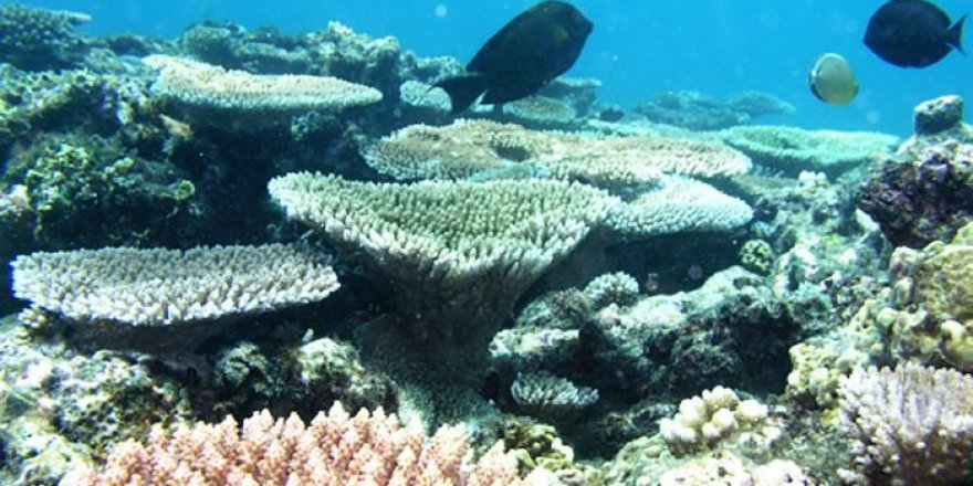 Great Barrier Reef shows signs of heat stress