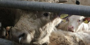 New Zealand announces stricter rules on livestock shipments
