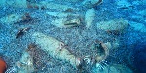 Cyprus discovers Roman-era shipwreck