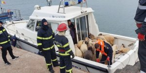 Cargo ship with 14,600 sheep overturns in Black Sea
