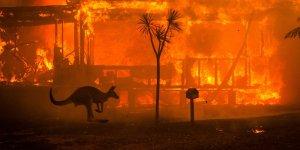 Carnival Australia supports Red Cross bushfire fund